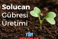 Photo of Solucan Gübresi Üretimi (En Önemli 7 Başlık)